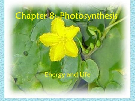 Chapter 8: Photosynthesis Energy and Life. Rainy Day Suppose you earned extra money from a part- time job. You might be tempted to spend all the money,