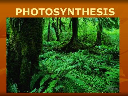 PHOTOSYNTHESIS Photosynthesis: Life from Light and Air.