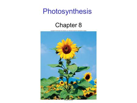 Photosynthesis Chapter 8. 2 Photosynthesis Overview Energy for all life on Earth ultimately comes from photosynthesis. 6CO 2 + 12H 2 O C 6 H 12 O 6 +