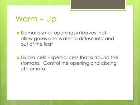 Warm – Up  Stomata-small openings in leaves that allow gases and water to diffuse into and out of the leaf  Guard cells – special cells that surround.