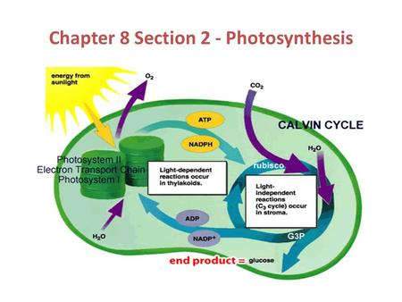 Chapter 8 Section 2 - Photosynthesis. Photosynthesis  Light energy is trapped and converted into chemical energy during photosynthesis.