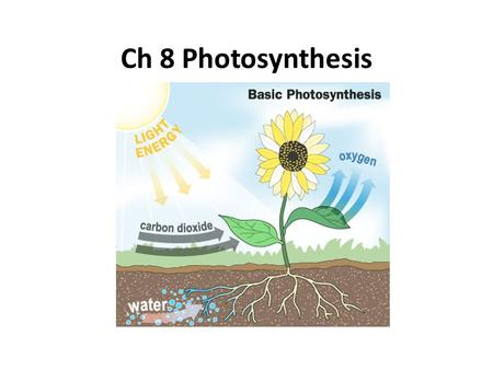 Ch 8 Photosynthesis.