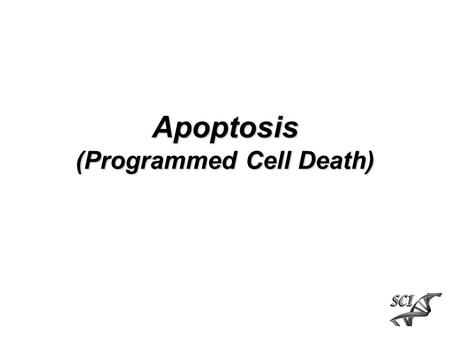 Apoptosis (Programmed Cell Death). Apoptosis vs Necrosis Level of stress, change in environment stress apoptosisnecrosis.