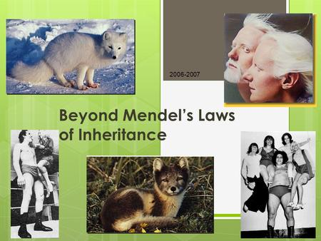 2006-2007 Beyond Mendel's Laws of Inheritance Extending Mendelian genetics  Mendel worked with a simple system  peas are genetically simple  most.