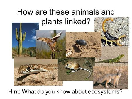 How are these animals and plants linked? Hint: What do you know about ecosystems?