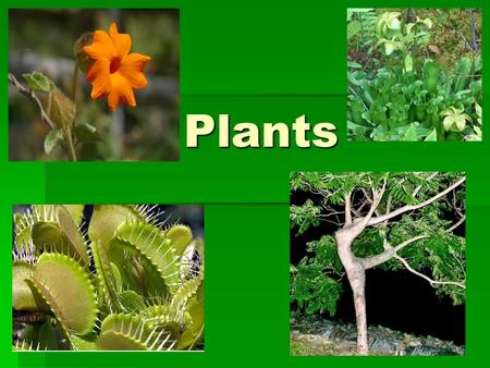 Plants. Plant Adaptations ADAPTING TO LAND Plants moved from water to land -adaptations to survive this new and strange environment. -adaptations to.