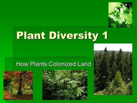 How Plants Colonized Land