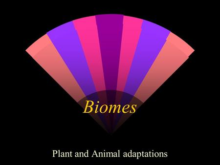 Biomes Plant and Animal adaptations. Tundra Plant and Animal Adaptations w Plant life is limited to mosses, grasses, lichens, herbs and woody shrubs.