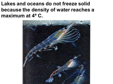 Lakes and oceans do not freeze solid because the density of water reaches a maximum at 4º C.