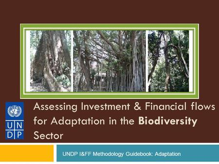 Assessing Investment & Financial flows for Adaptation in the Biodiversity Sector UNDP I&FF Methodology Guidebook: Adaptation.