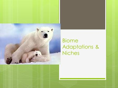 Biome Adaptations & Niches