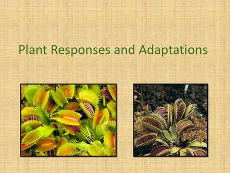 Plant Responses and Adaptations. Hormones Just like animals, plants rely on hormones to control growth and development, and responses to environmental.