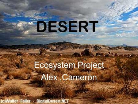 DESERT Ecosystem Project Alex,Cameron. LOCATION Deserts cover about one fifth of the Earth's land surface. Most hot deserts are near the tropic of cancer.
