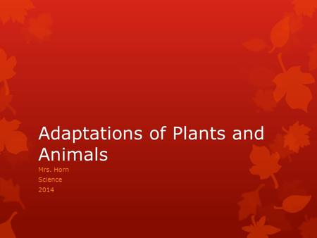 Adaptations of Plants and Animals Mrs. Horn Science 2014.