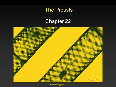 Mader: Biology 8 th Ed. The Protists Chapter 22. Mader: Biology 8 th Ed. Outline General Biology Evolution Diversity – Green Algae – Red Algae – Brown.