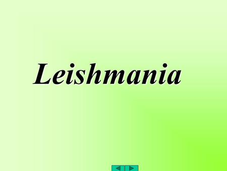 Leishmania . protozoal disease of mammals, a zoonotic disease.. 23+ pathogenic species.. transmitted by sandflies (Phlebotomus species).. in the human.