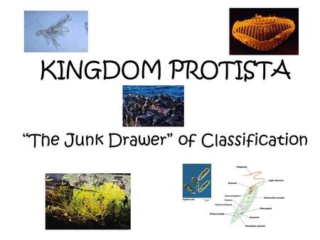 "KINGDOM PROTISTA ""The Junk Drawer"" of Classification."