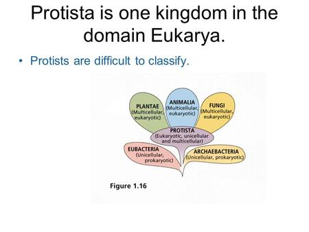 Protista is one kingdom in the domain Eukarya. Protists are difficult to classify.