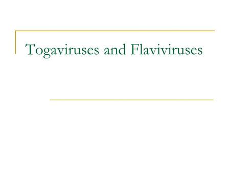 Togaviruses and Flaviviruses. Unique features of Togaviruses & Flaviviruses Enveloped Positive sense ssRNA Togaviruses replicate in the cytoplasm and.
