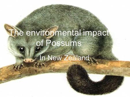 The environmental impact of Possums In New Zealand.