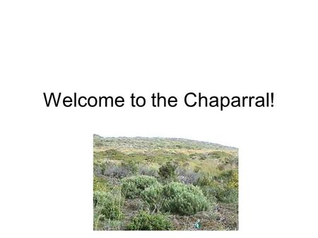 Welcome to the Chaparral!. Have you ever dreamed of visiting the old Wild West? You are probably picturing chaparral.
