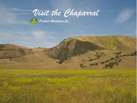 Visit the Chaparral Pristine Adventures Co.. WHERE IS THE CHAPARRAL?