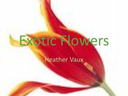 Exotic Flowers Heather Vaux Dutch Amaryllis Palms Anthuriums Gingers Birds of Paradise Calatheas Calla Lily Musas Gardenias Heliconia Pendula Orchids.
