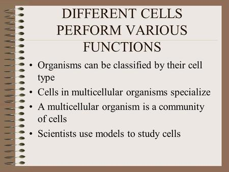 DIFFERENT CELLS PERFORM VARIOUS FUNCTIONS