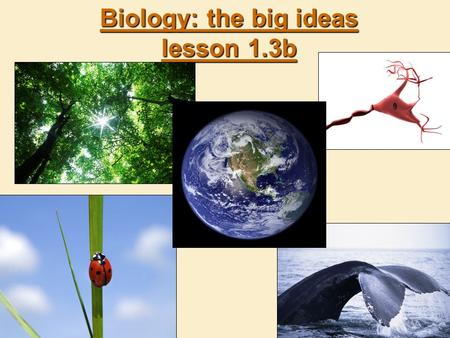 Biology: the big ideas lesson 1.3b. Life at every level  Biology studies a wide range of living things: from small to huge.  Biochemistry is the study.