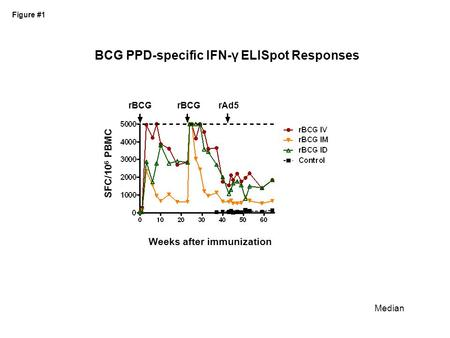 BCG PPD-specific IFN-γ ELISpot Responses Weeks after immunization