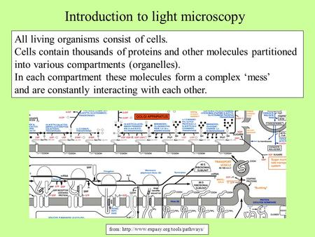 Introduction to light microscopy All living organisms consist of cells. Cells contain thousands of proteins and other molecules partitioned into various.