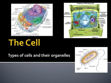 Types of cells and their organelles