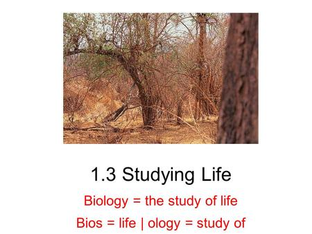 1.3 Studying Life Biology = the study of life Bios = life | ology = study of.