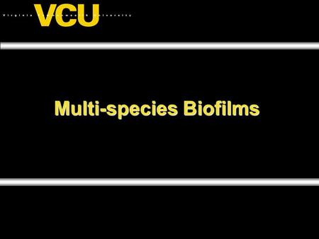 Multi-species Biofilms. Biofilms A biofilm is a community of microorganisms, associated with a surface, and encased in an extracellular polymeric matrix.A.