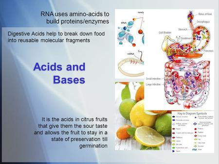 Acids and Bases RNA uses amino-acids to build proteins/enzymes It is the acids in citrus fruits that give them the sour taste and allows the fruit to stay.