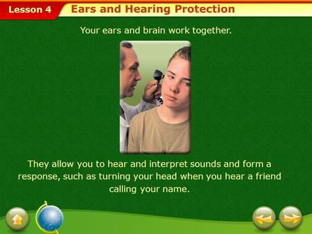 Lesson 4 Your ears and brain work together. They allow you to hear and interpret sounds and form a response, such as turning your head when you hear a.