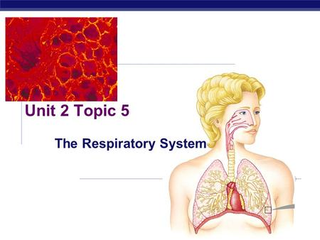 Unit 2 Topic 5 The Respiratory System What is respiration?  Exchange of gases between the internal environment and the external environment  Need O.
