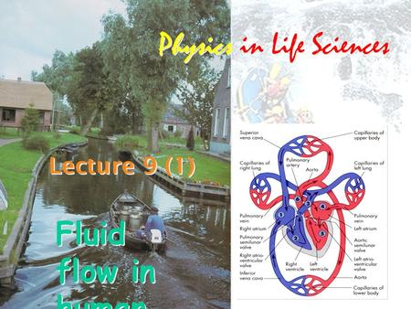 Lecture 9 (1) Physics in Life Sciences Fluid flow in human body2.