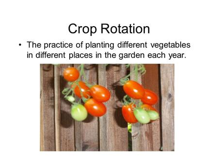 Crop Rotation The practice of planting different vegetables in different places in the garden each year.