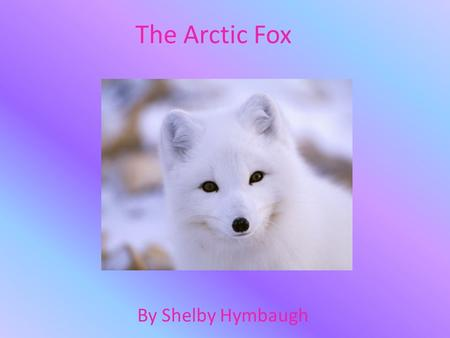 The Arctic Fox By Shelby Hymbaugh. General Information The fox is a mammal. The scientific name is Alopex Lagopus. It lives up to 15 years.
