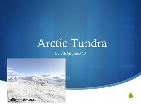  Arctic Tundra By: Ali Megahed 6B gallery.maiman.net.