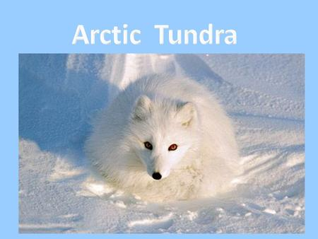 "The Arctic is mostly ice and snow with many animals. When the tundra comes many plants grow. The word ""tundra"" means treeless plain. The growing season."