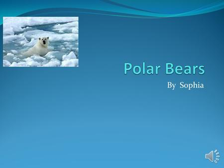 Polar Bears By Sophia.