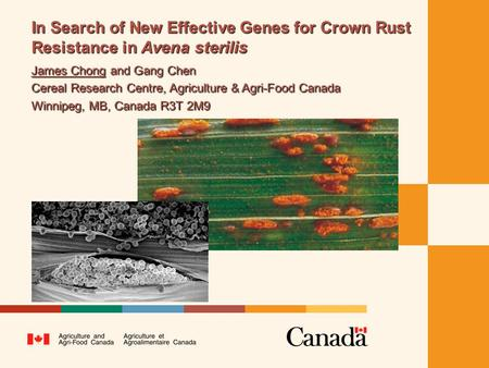 In Search of New Effective Genes for Crown Rust Resistance in Avena sterilis James Chong and Gang Chen Cereal Research Centre, Agriculture & Agri-Food.