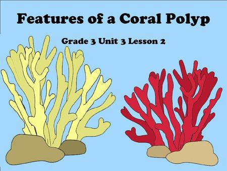 Features of a Coral Polyp Grade 3 Unit 3 Lesson 2.