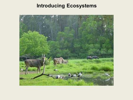 Introducing Ecosystems. Ecosystem: all the living organisms in an area and their non-living environment.