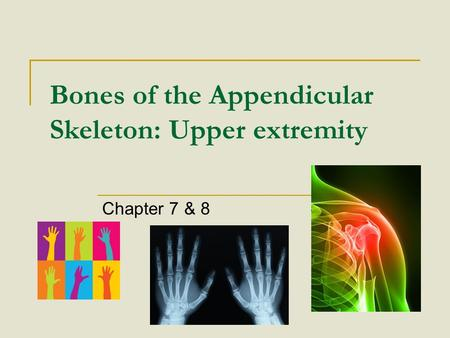 Bones of the Appendicular Skeleton: Upper extremity Chapter 7 & 8.