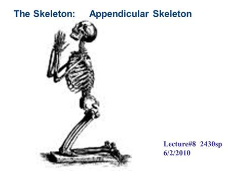 The Skeleton: Appendicular Skeleton Lecture#8 2430sp 6/2/2010.