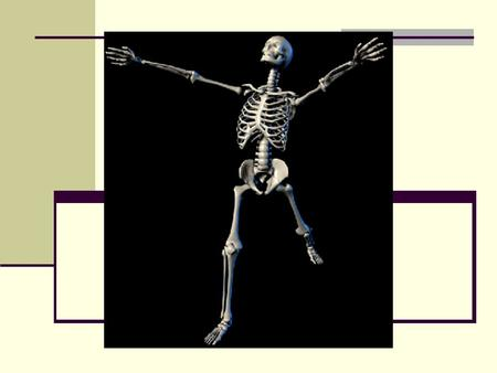 The Axial Skeleton Chapter 7. I. Skeletal Divisions (206 bones) A. Axial Skeleton (80 bones) 1. Forms longitudinal axis of the body 2. Consists of: Skull.