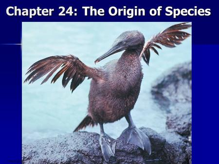 Copyright © 2008 Pearson Education, Inc., publishing as Pearson Benjamin Cummings Chapter 24: The Origin of Species.